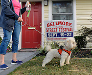 Bellmore, New York, U.S. 22nd September 2013.  PIERRE GENUTH, a 5 1/2-year-old white Toy Poodle with JOSIE GENUTH, of Plainview, checks out the entrance to the Bellmore Chamber of Commerce office, at the 27th Annual Bellmore Festival, featuring family fun with exhibits and attractions in a 25 square block area, with over 120,000 people expected to attend over the weekend.