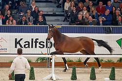 589, NN<br /> KWPN Stallionshow - 's Hertogenbosch 2018<br /> © Hippo Foto - Dirk Caremans<br /> 02/02/2018