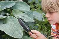 Boy (7-9) examining leaf through magnifying glass