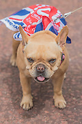 A patriotic dog - Queens 90th birthday was celebrated by the traditional Trooping the Colour as well as a flotilla on the river Thames.