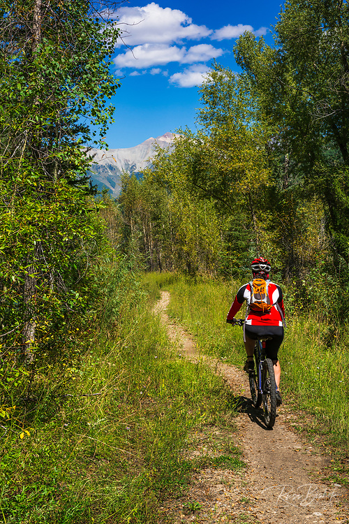 Mountain biker riding singletrack on the Galloping Goose Trail, Uncompahgre National Forest, Colorado USA (MR)