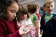 Kindergarten-aged children react to holding Manduca caterpillars during a University of Wisconsin-Madison Insect Ambassadors outreach program held at C.H. Bird Elementary School in Sun Prairie, Wis., on May 16, 2008.