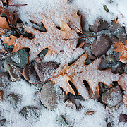 Dusting of snow on autumn leaves and rocks, close-up.