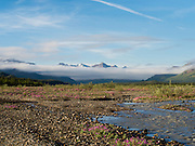 The sun rises over the Teklanika River, Denali National Park, Alaska, with beautiful fireweed in bloom.