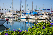 Boats at Oceanside Harbor