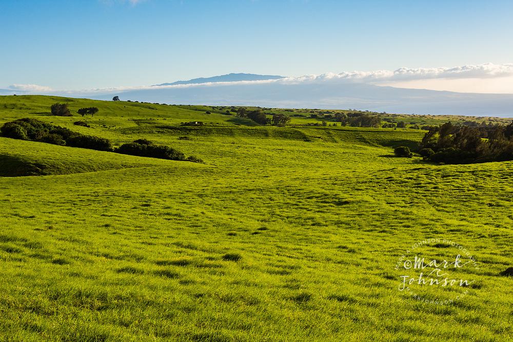 Lush pasture land & Mauna Kea, Waimea, Big Island, Hawaii