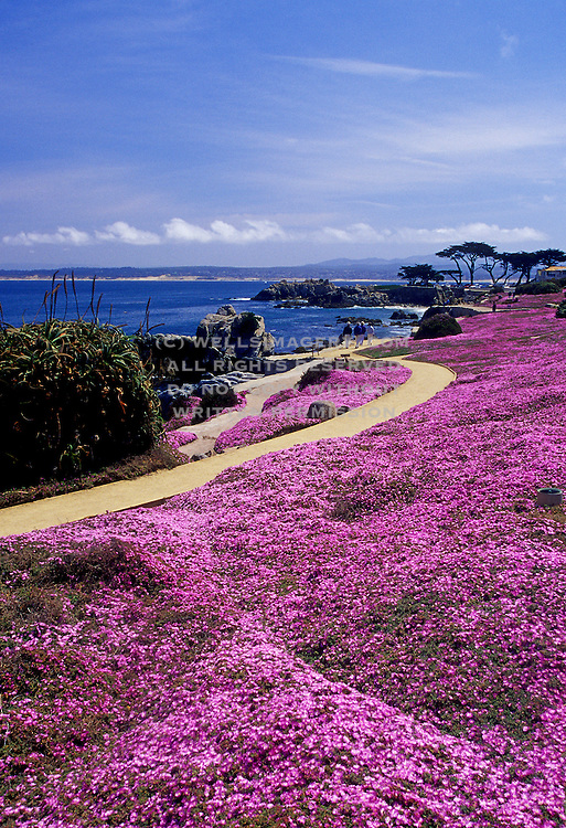 Image of people walking on path with spring ice plant blooms overlooking Monterey Bay, California