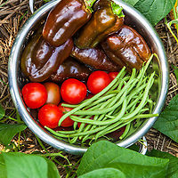 A harvest bowl filled with Sweet Chocolate bell peppers, Gardeners delight tomatoes and Maxibel French fillet green beans