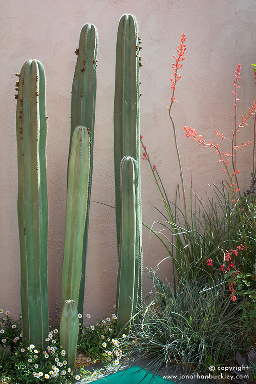 Stenocereus - Cactus with Hesperaloe parviflora<br /> Beneath a Mexican Sky Garden<br /> RHS Chelsea Flower Show 2017<br /> Design: Manoj Malde<br /> Built by: Living Landscapes<br /> Sponsored by: Inland Homes PLC<br /> Photography &copy; Copyright Jonathan Buckley