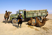 GOBI DESERT, MONGOLIA..08/30/2001.Tzochorinam, gers belonging to the family of wealthy camel herder and local hero Chimiddorj. Chimiddorj with camels and his ZIL truck..(Photo by Heimo Aga).