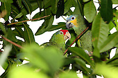 Tropical and Exotic Editorial and Stock Bird Images