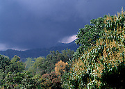Storm gathers over the Blue Mountains  - view from Strawberry Hill Jamaica