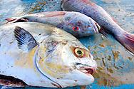 Fish in Cayos Ana Maria, Ciego de Avila, Cuba.