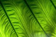 Flowing Green