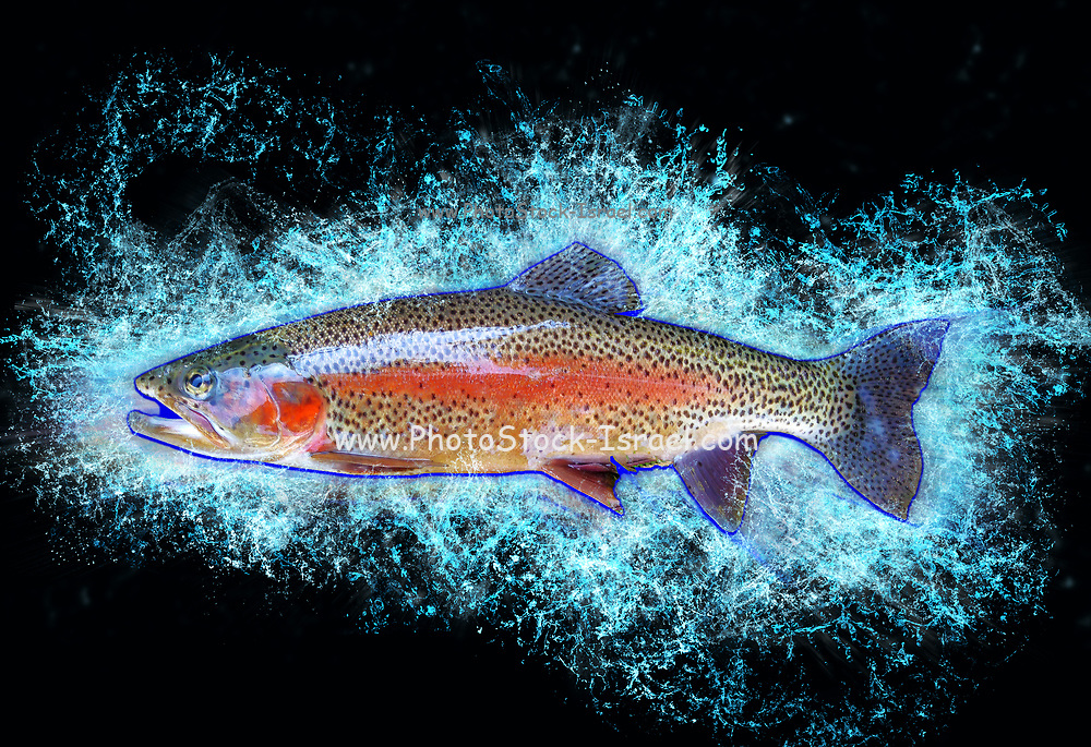 Digitally enhanced image of a side view of a trout