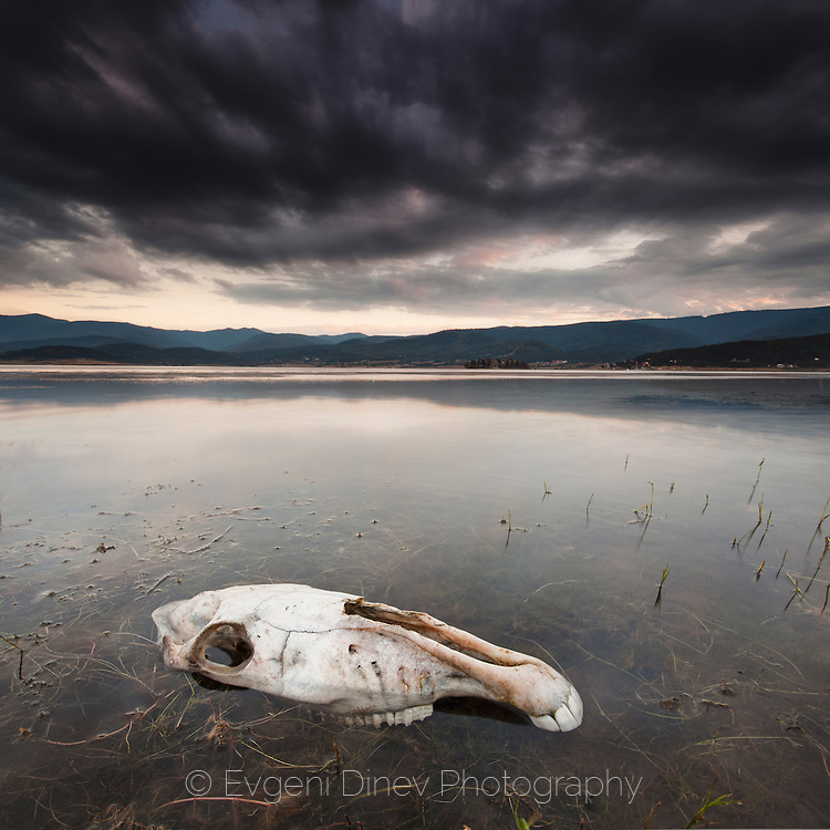 Horse skull in the lake