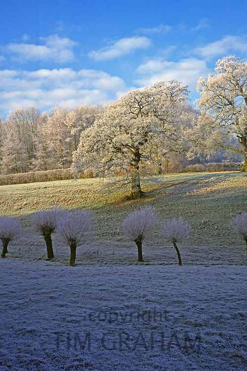 Frost at Swinbrook in the Cotswolds, Oxfordshire, England, United Kingdom.
