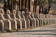 louxor temple  sphynx alley  Louxor - Egypte    /  temple de Louqsor, allee des sphynx   Louqsor - Egypt