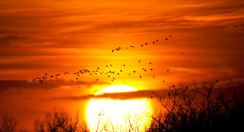 Nebraska2009.-Sandhill Cranes and Prairie Chickens along with landscapes of the Great Plains.  Photo's by Tom Lynn