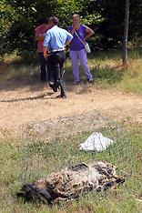 20120730 CANE TROVATO MORTO DAVANTI AL CANILE CON MUSO PIXELLATO