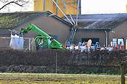 Nederland, the Netherlands, Beneden Leeuwen, 20-12-2016Op een kippenboerderij in dit dorp in het land van Maas en Waal is kippengriep geconstateerd. Het bedrijf wordt geruimd, evenals twee anderen in de straal van 1 km. De dieren worden dmv C)2 vergasten in grote zakken gestopt .Foto: Flip Franssen