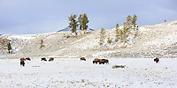 Near Blacktail Ponds in Yellowstone<br /> <br /> &copy;2015, Sean Phillips<br /> http://www.RiverwoodPhotography.com