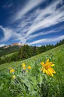 Alpine meadows bursting forth in bloom and endless skies greet the outdoor enthusiast as they explore the Gun Meadows area around Spruce Lake in the Southern Chilcotin Mountains.  British Columbia, Canada.