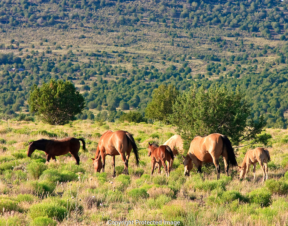 Horses grazing along Route 66