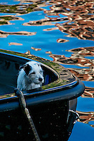 Amsterdam, Holland. A dog in a boat.  Canal water and vegetation gives a surrealistic feel to the composition.