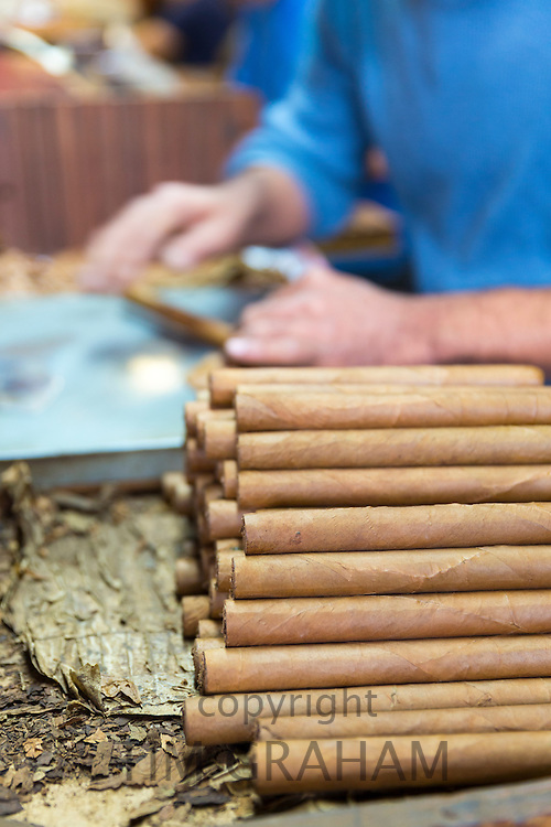 Rollers making hand-rolled cigars of long leaf tobacco in cigar factory, Decatur Street, French Quarter of New Orleans, USA