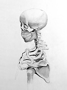 Graphite drawing of the human skeletal system including the head, spine, clavicle and ribs.