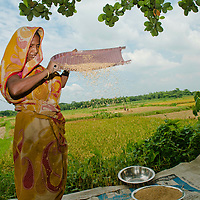 World Bank Photo Dive 2013- Photos <br /> <br /> <br /> Agriculture,Chandiber,TANGAIL<br /> <br /> -Delduar, Tangail