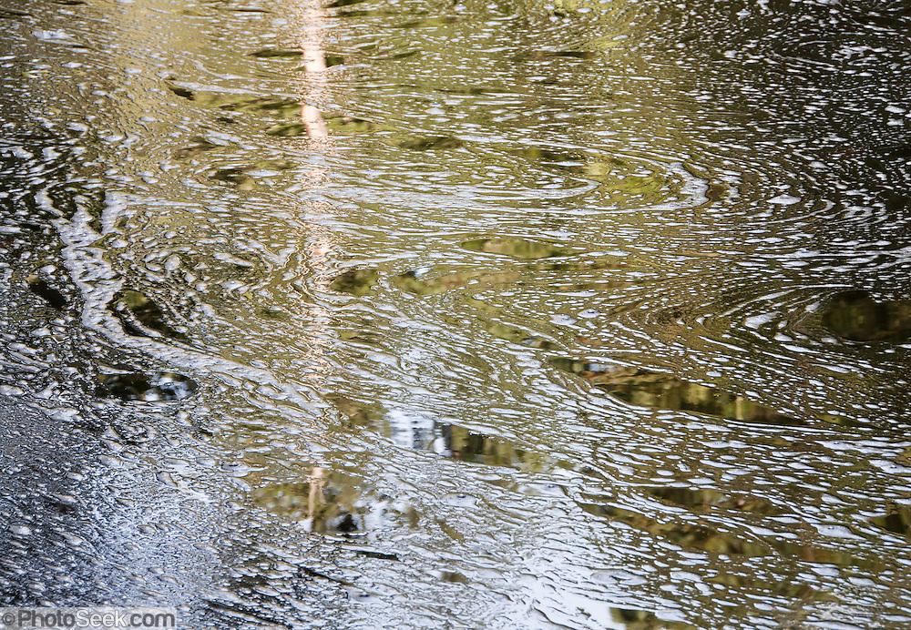 Cataract Creek creates foam on Alpine Lake, in Mount Tamalpais Watershed, Marin County Municipal Water District, California, USA.