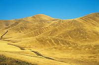 Road across yellow hills