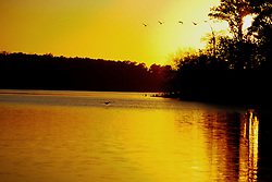 Geese fly across Evergreen Lake in Comlara Park with the setting sun in the background.