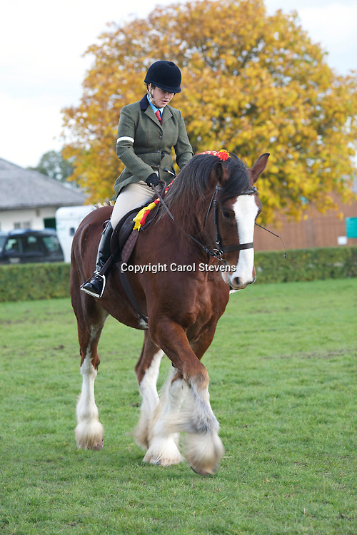 Ami Williamson riding Mr J R Richardson's 4 year old bay gelding Shire Horse, Tochill Joseph Jebb<br /> 2nd place in the Ridden Heavy Horse Class