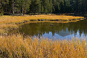 The early morning sunlight illuminates the grasses along the Tuolumne River near Tioga Pass in Yosemite National Park.