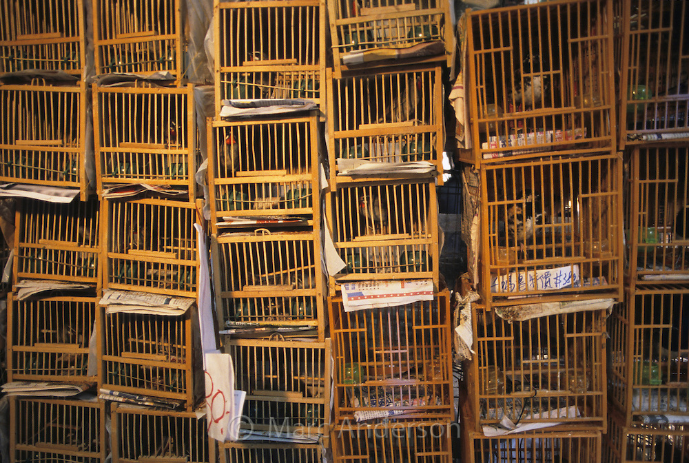 Birds in small cages at the Mongkok Bird Market, Hong Kong, China.