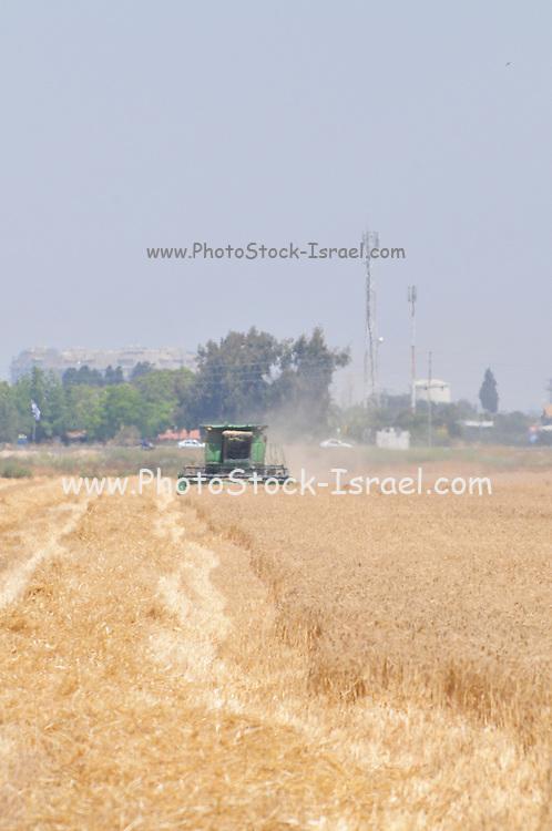 Israel, Jezreel Valley, Wheat harvest
