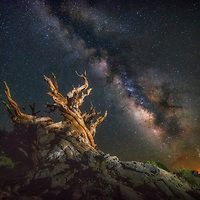 Milky Way with an ancient bristlecone pine tree in the White Mountains of California.
