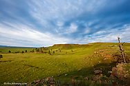 Cattle graze near the the South Dakota border in the Custer National Forest, Montana, USA