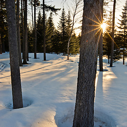 "The sun goes down behind the trees in the ""front yard"" of Medawisla Wilderness Camps near Greenville, Maine."
