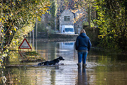 © Licensed to London News Pictures 16/11/2019, Cerney Wick, UK. A resident of Cerney Wick, near Cirecenster walskher dog down a flodded road in the village. Photo Credit : Stephen Shepherd/LNP