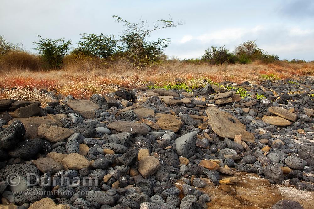 Lava rock along the shore of James Bay on Santiago Island, Galapagos Archipelago - Ecuador.
