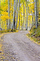 Last Dollar Road passing through a aspen grove between Ridgway and Telluride, Colorado.