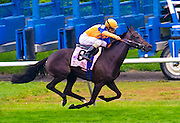 """""""Stacelita"""" with sure to be elected into the riders Hall of Fame jockey, Ramon Dominguez, aboard, winning the Flower Bowl in 2011."""