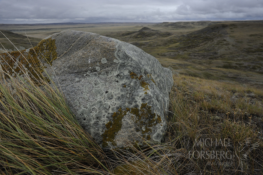 Northern Great Plains region, Grasslands National Park, Saskatchewan, Canada..Lichen covered glacial erratic  in prairie overlooking Frenchman River valley landscape