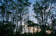 Sunset in the forest of Riding Mountain National Park, Manitoba