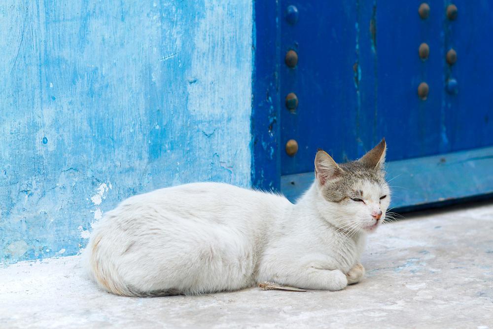 RABAT, MOROCCO - 27th May 2014 - Cat sitting on doorstep in the Kasbah of the Udayas, Rabat Medina, Morocco.
