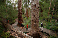"The ""Ancient Empire Walk"" is the path on the ground on the Valley of the Giants park near Denmark where vistors can walk among huge karri and other native australian trees."